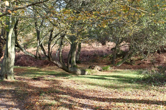 Woodland scene 2