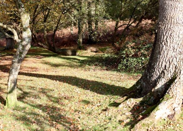Woodland scene 3