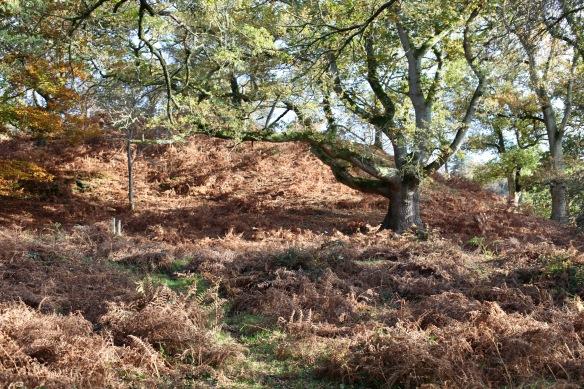 Woodland scene 5