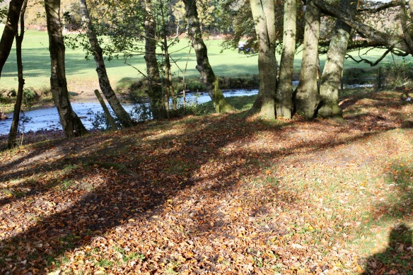 Shadows on leaves by stream