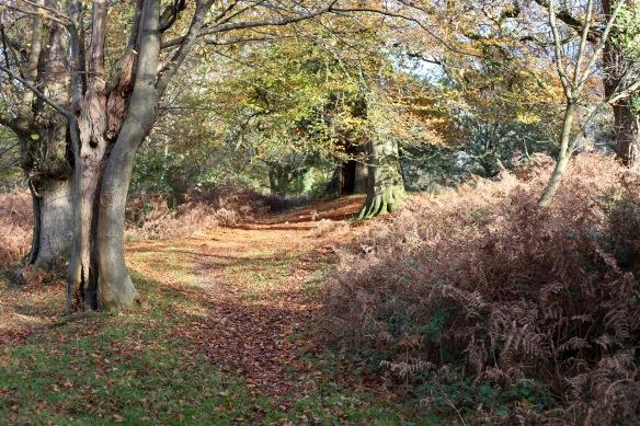 Woodland scene 6