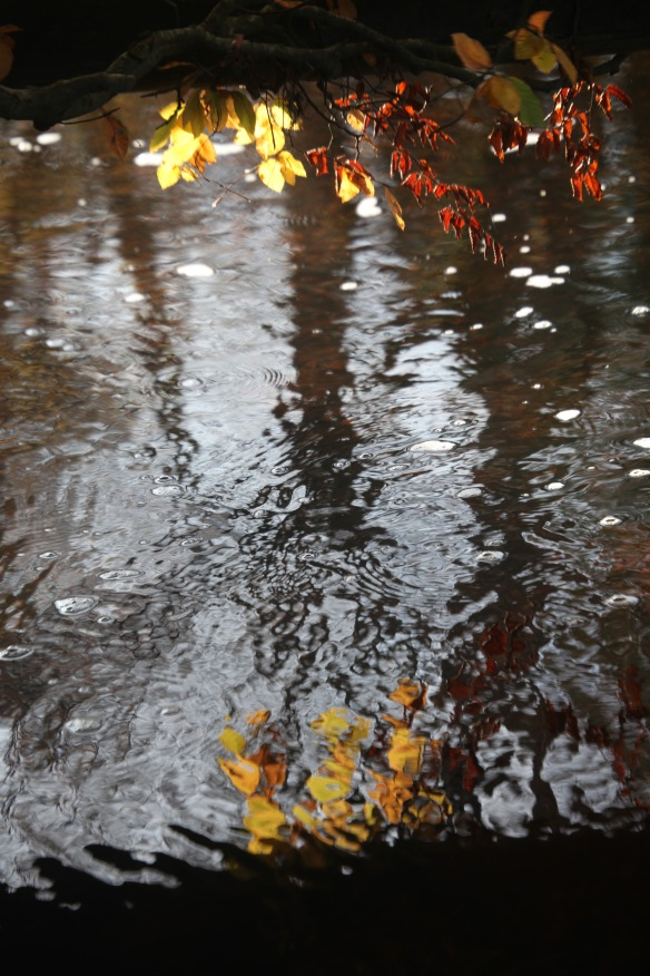 Autumn leaves and reflection