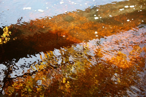 Autumn reflected in stream