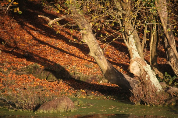 Shadows on autumn leaves 1