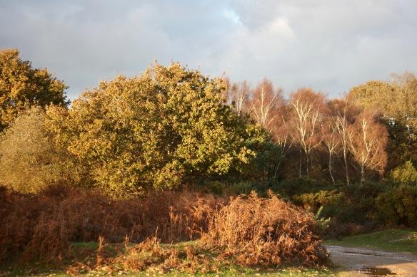 Trees and bracken 1