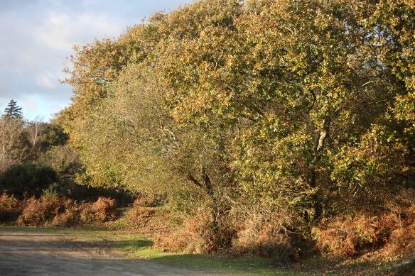 Trees and bracken 2