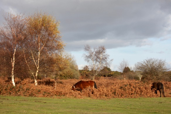 Ponies in landscape 1