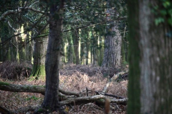 Forest scene 4