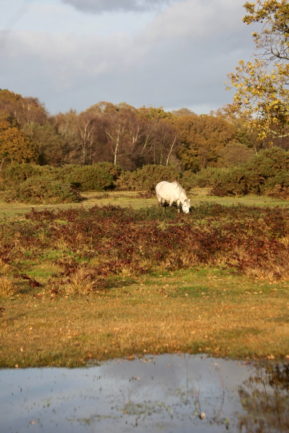 Pony in landscape 3
