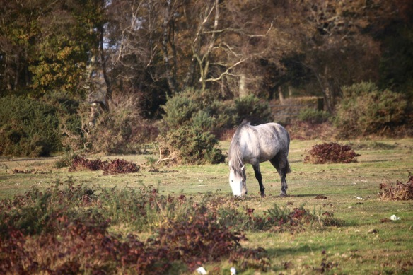 Pony in landscape 4