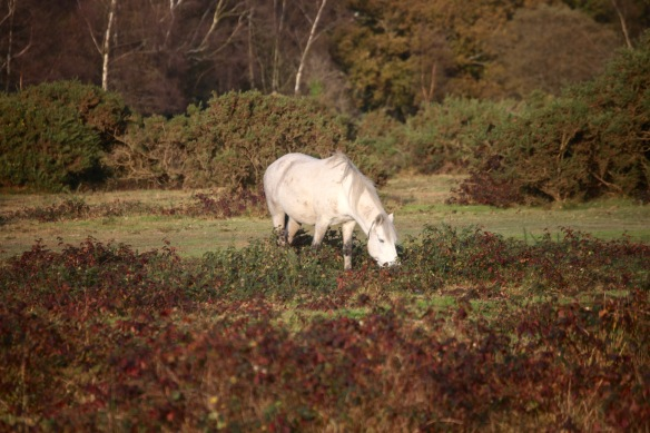 Pony in landscape 5