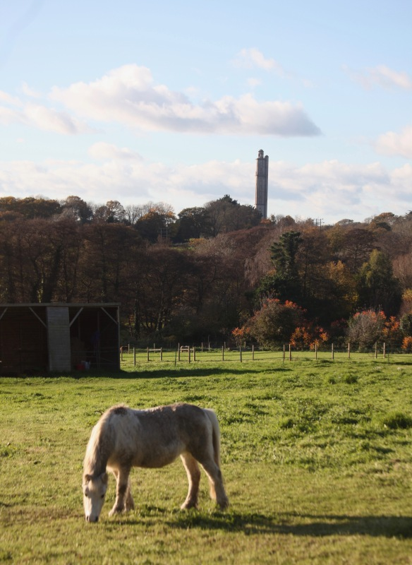 Sway Tower and pony
