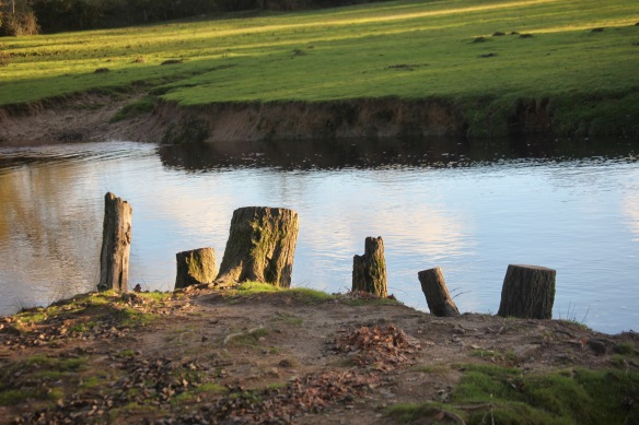 Stumps by water