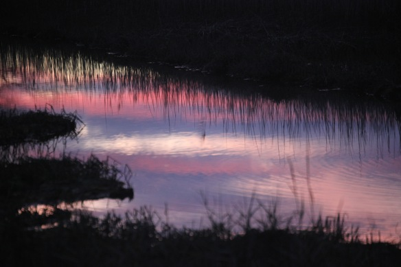 Sunset reflected in stream