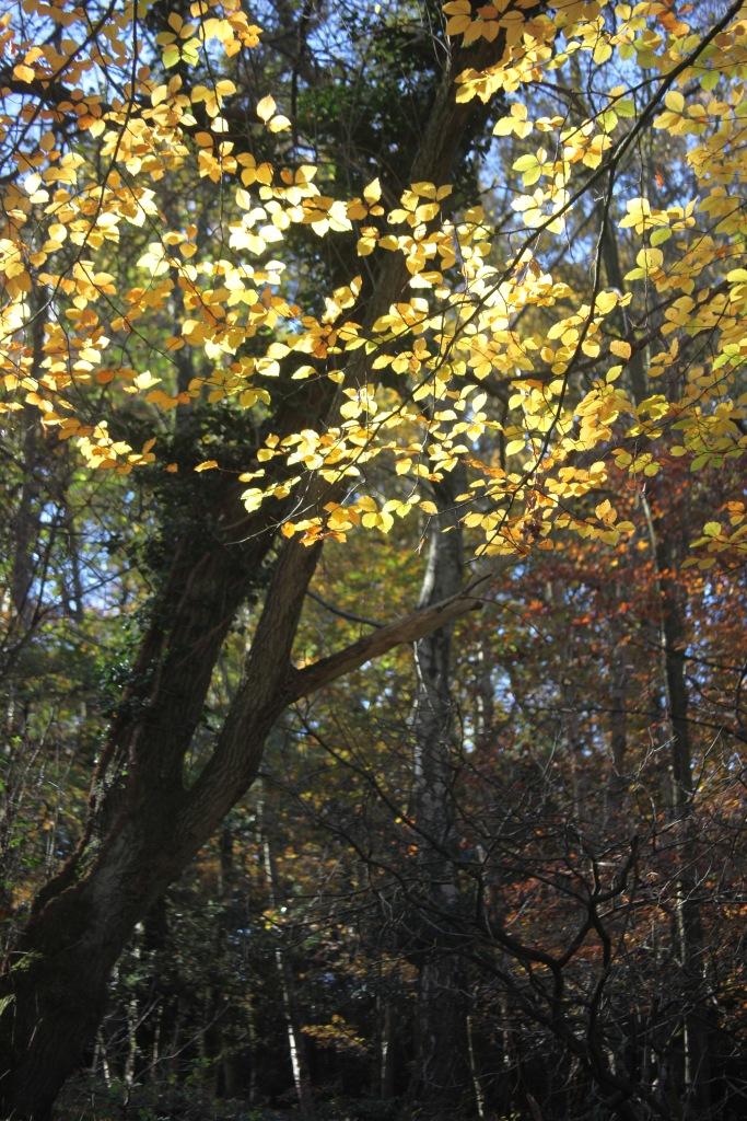 Trees in autumn 1