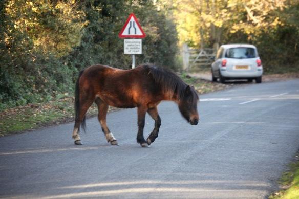 Pony on road 1