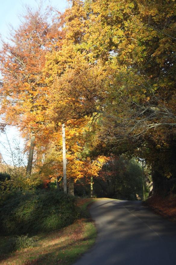Trees in autumn 2