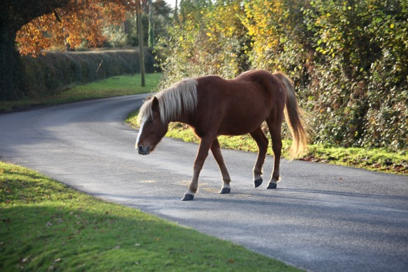 Pony on road 2