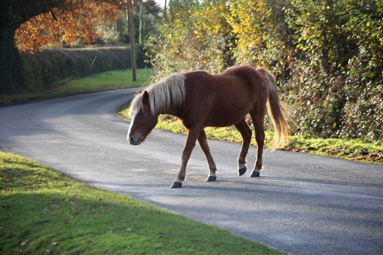 Pony on road 2