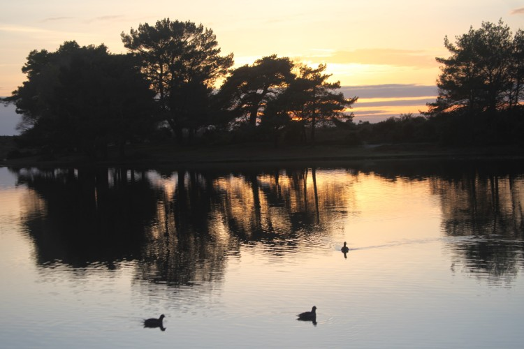 Hatchet Pond and waterfowl 1
