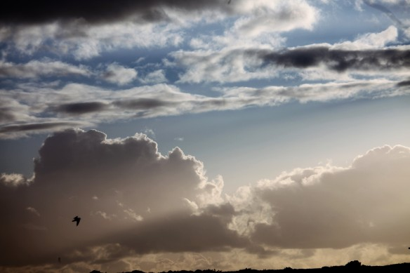 Clouds and gull