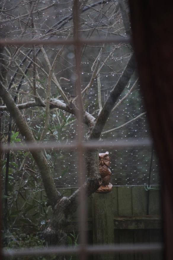 Garden through rainy window