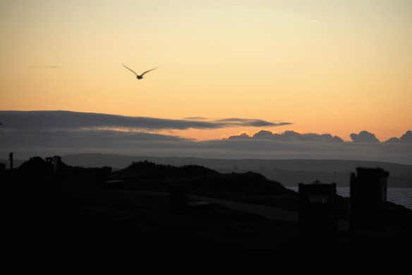 Sunrise with gull