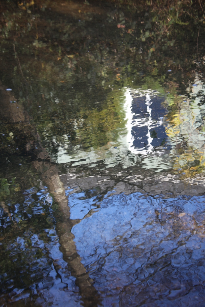 Reflections in stream