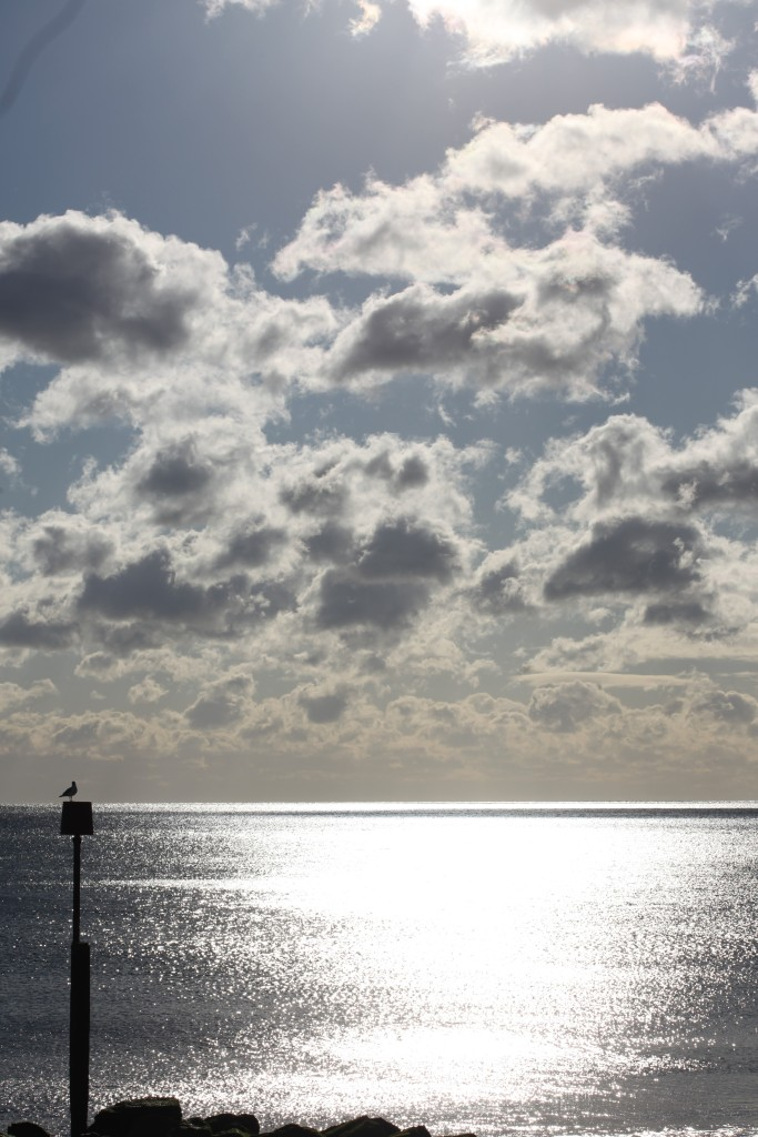 Clouds, sea, gull