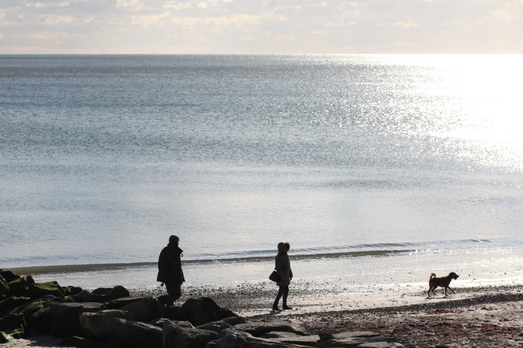 Walkers and dog on beach