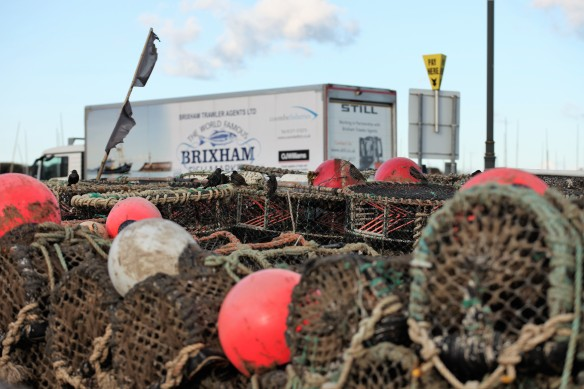 Starlings, crab pots, buoys