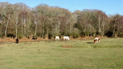 Ponies in landscape 9