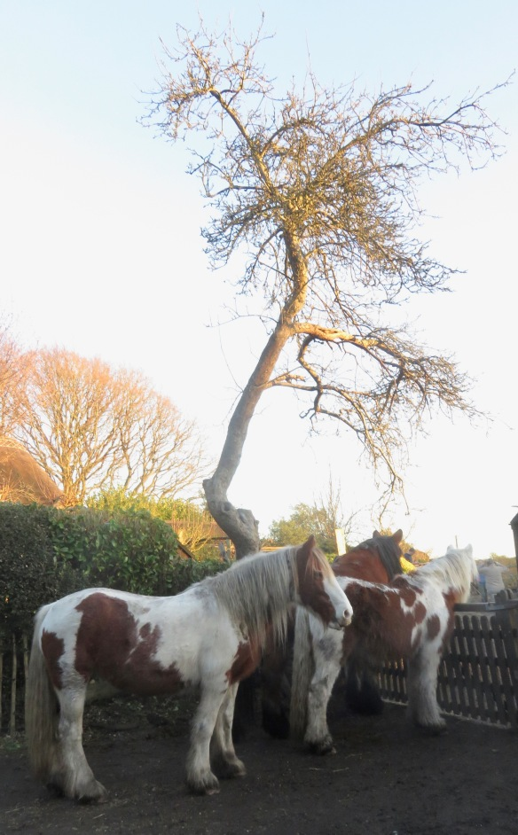 Farm horses waiting for tea