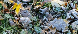 Frosted leaves - Version 2