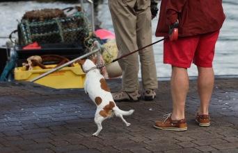 Terrier on quay 2