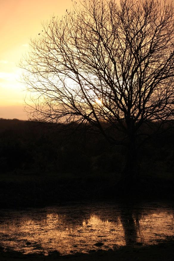 Sun, tree, pool