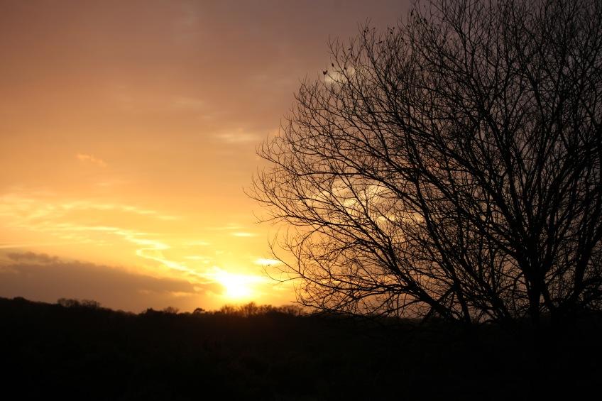 Sunset, tree 1