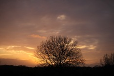 Sunset, trees 2