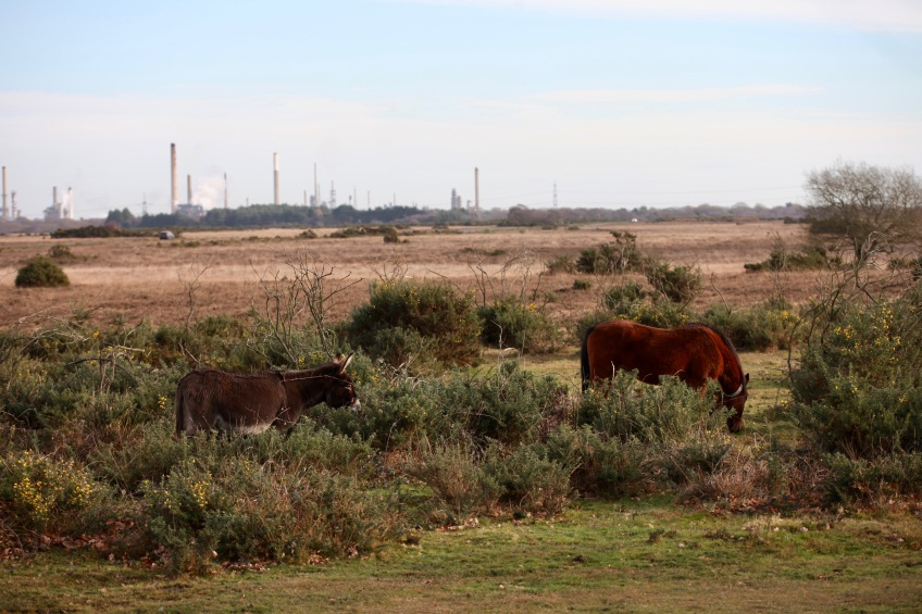 Donkeys, pony, Fawley power station