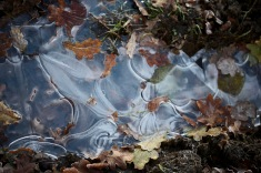 Ice and leaves 1