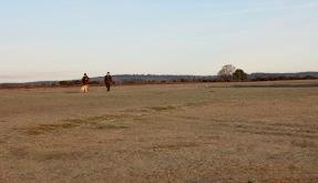 Dog walkers 2
