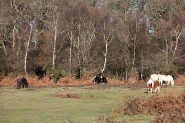 Ponies in landscape 3