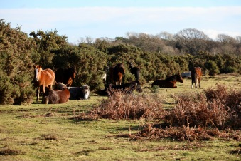 Ponies in landscape 6