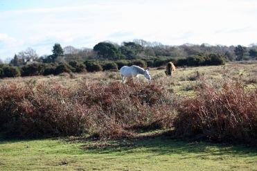 Ponies in landscape 7