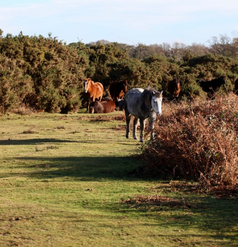 Ponies in landscape 8