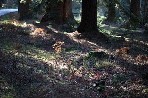 Bracken and tree roots