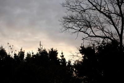 Dawn 4