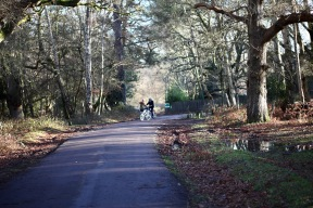 Cyclists in forest