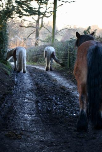 Farm horses 1