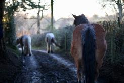 Farm horses 2
